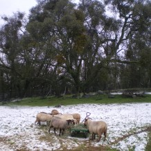 Snow on the farm!
